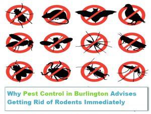 pest control in burlington