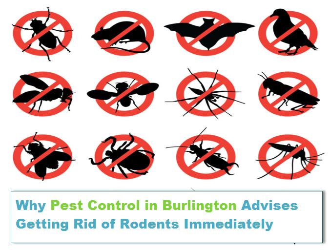 pest control in burlington