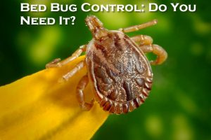 Bed Bug Control Do You Need