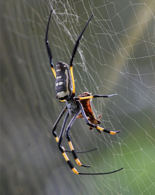 Spider Control Services, Spider Spray Services