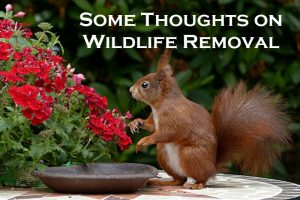 How should you attempt wildlife removal?