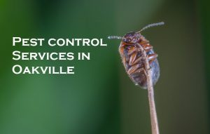 Pest control Services in Oakville