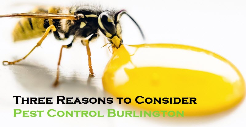 Pest Control Burlington