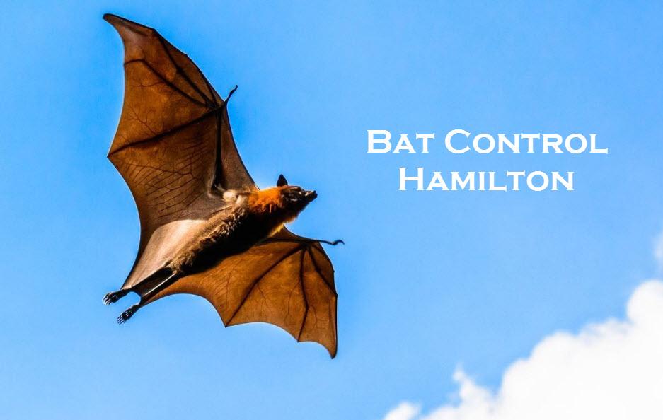 bat control hamilton