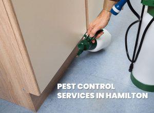Pest Control Services Hamilton