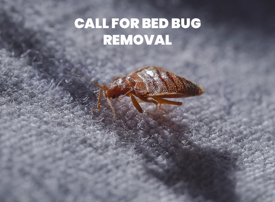 Call for Bed Bug Removal