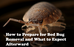 Bed Bug Treatment in Oakville