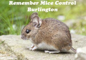 Remember Mice Control Burlington