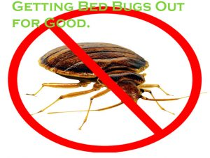 Getting Bed Bugs Out for Good.