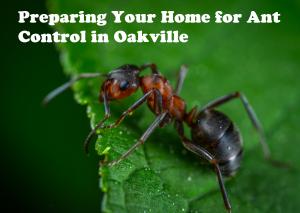 ant control oakville