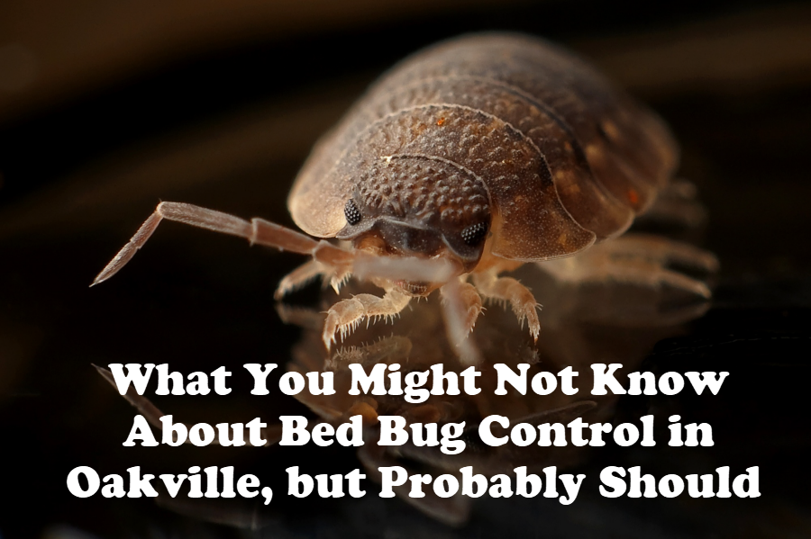Bed Bug Control in Oakville