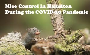 Mice control Hamilton