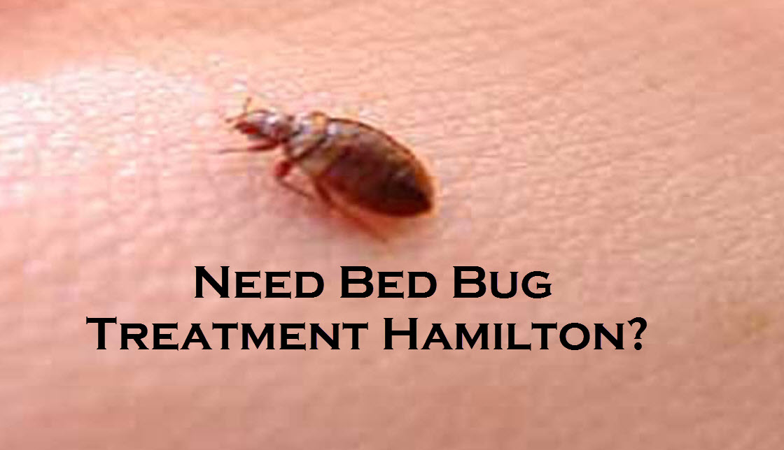 Need Bed Bug Treatment Hamilton?