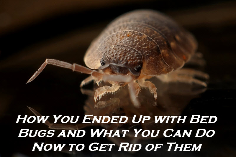 How You Ended Up with Bed Bugs