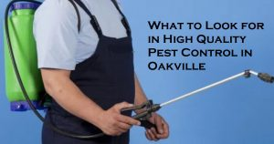 What to Look for in High Quality Pest Control in Oakville