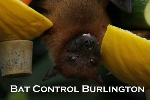 Bat Control
